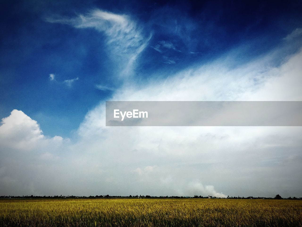 field, agriculture, farm, crop, landscape, sky, rural scene, nature, tranquility, beauty in nature, tranquil scene, day, cloud - sky, scenics, growth, outdoors, no people