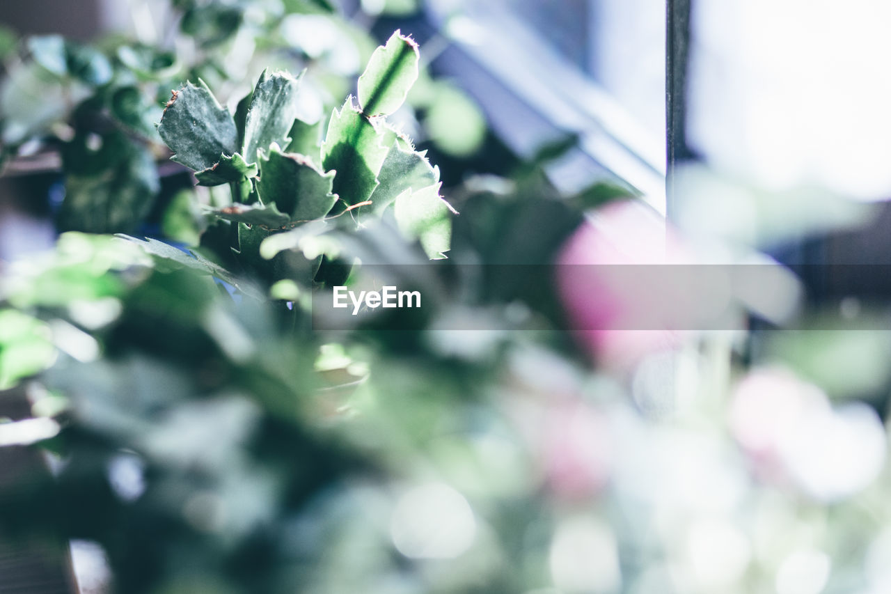 growth, green color, plant, selective focus, nature, no people, leaf, freshness, day, beauty in nature, outdoors, close-up, fragility