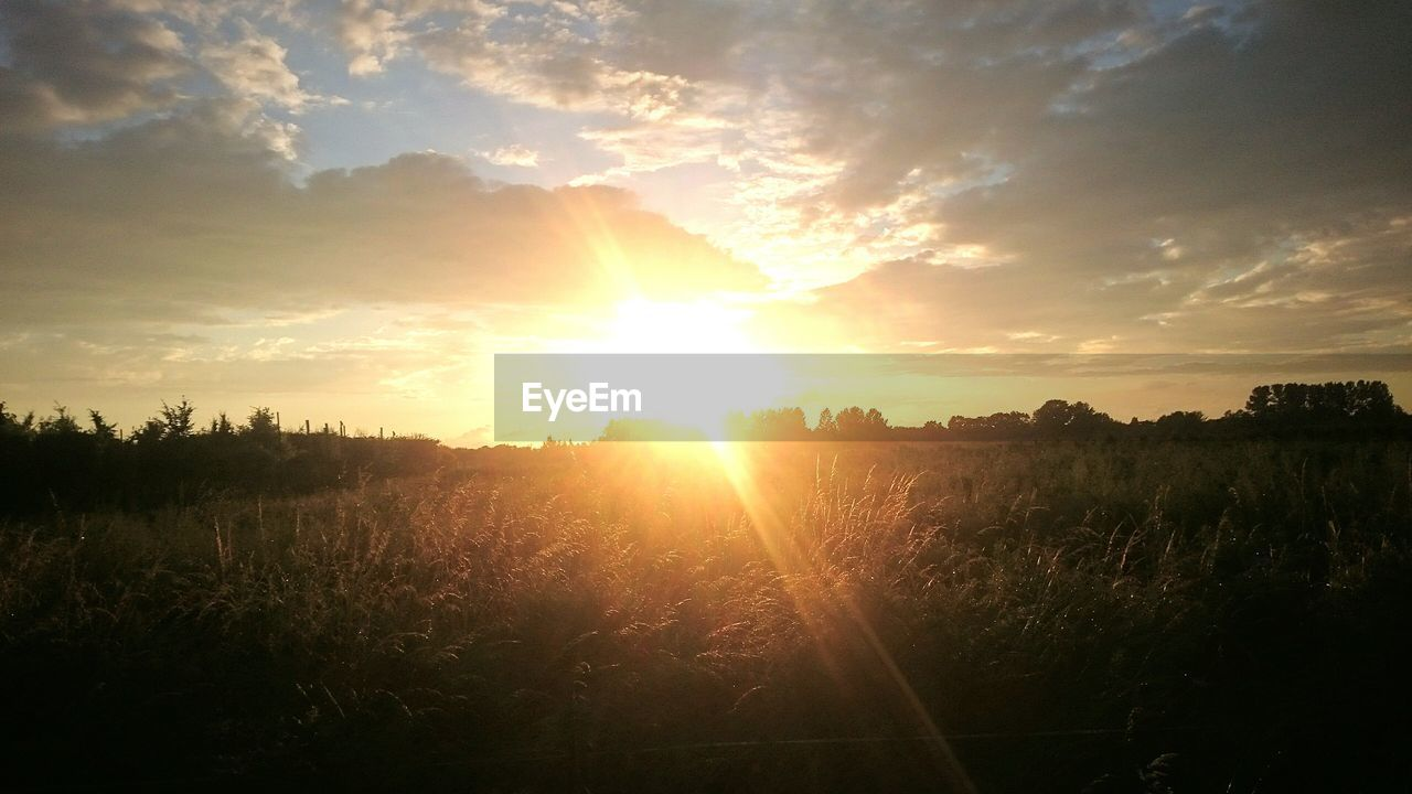 sunset, sun, sunbeam, nature, field, tranquility, tranquil scene, sunlight, scenics, landscape, beauty in nature, growth, agriculture, lens flare, sky, outdoors, no people, plant, silhouette, idyllic, rural scene, grass, tree, day