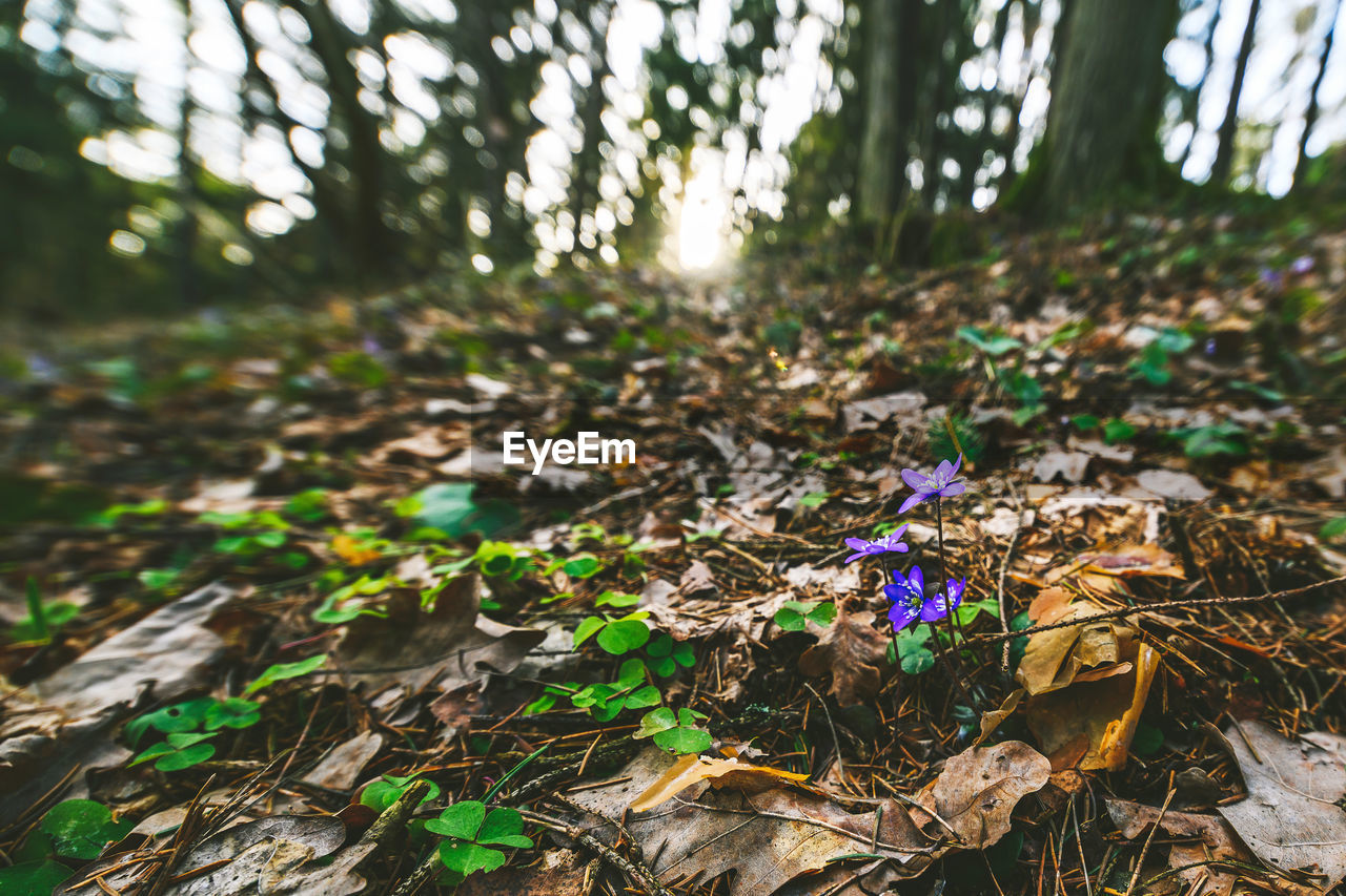 tree, land, leaf, plant, plant part, dry, day, nature, forest, no people, leaves, focus on foreground, falling, autumn, field, outdoors, change, selective focus, tranquility, growth, surface level, dried