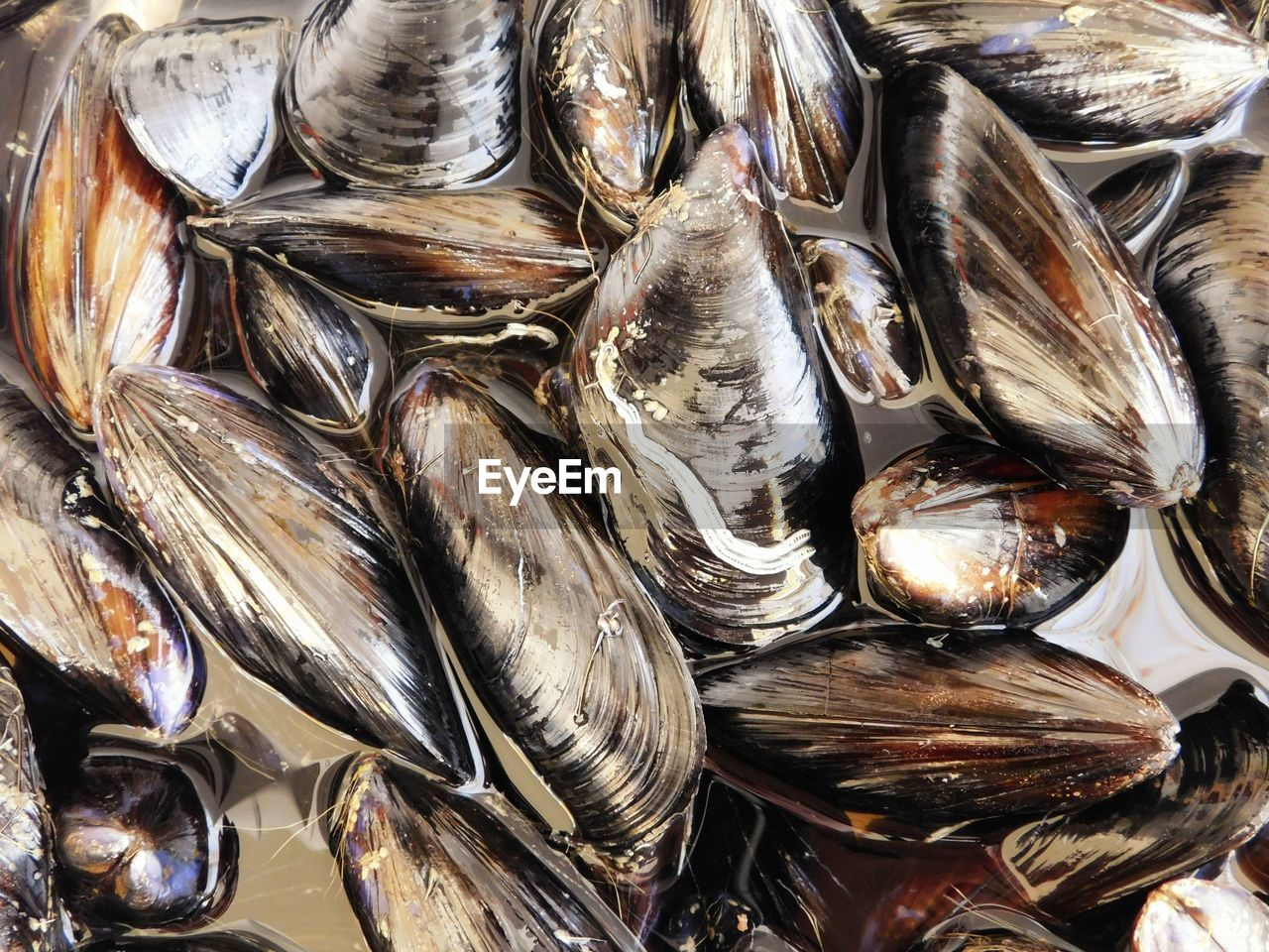 Close-up of mussels for sale at fish market