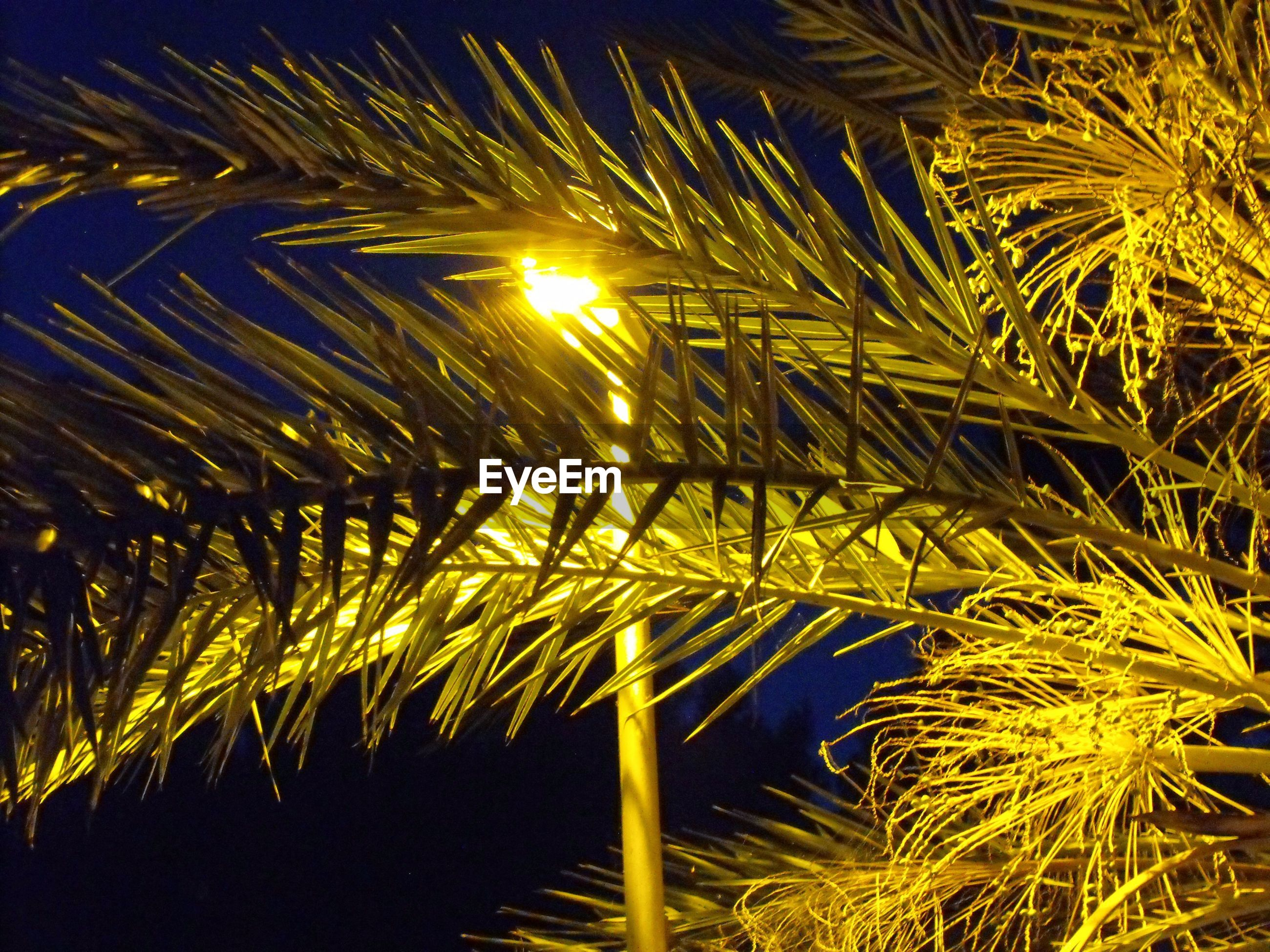 Low angle view of palm tree and illuminated street light at night