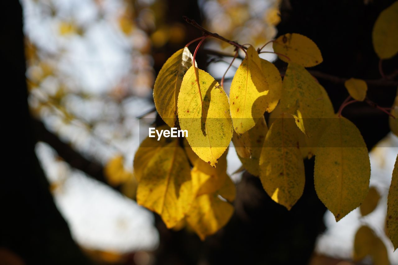 yellow, leaf, nature, focus on foreground, close-up, beauty in nature, outdoors, day, no people, autumn, fragility, branch, flower, tree, freshness