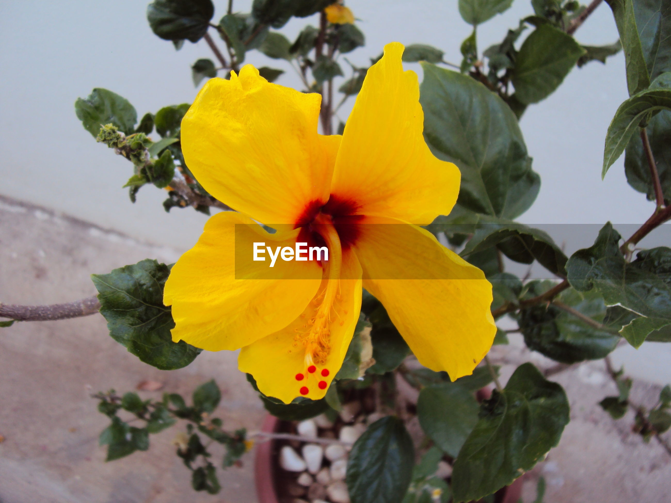 flower, yellow, fragility, growth, petal, nature, plant, flower head, close-up, focus on foreground, beauty in nature, freshness, no people, blooming, outdoors, day, pollen