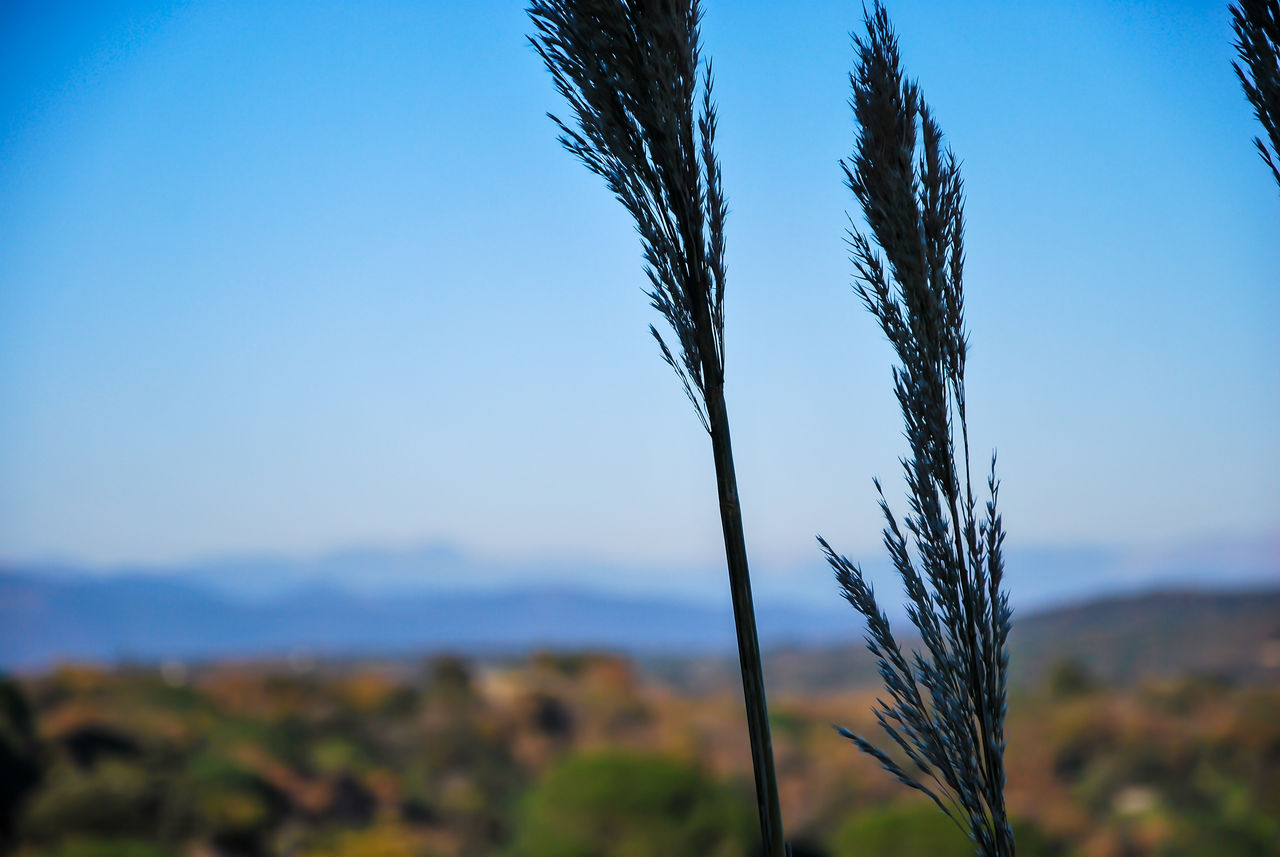 nature, growth, plant, beauty in nature, focus on foreground, blue, day, outdoors, field, no people, close-up, freshness, sky