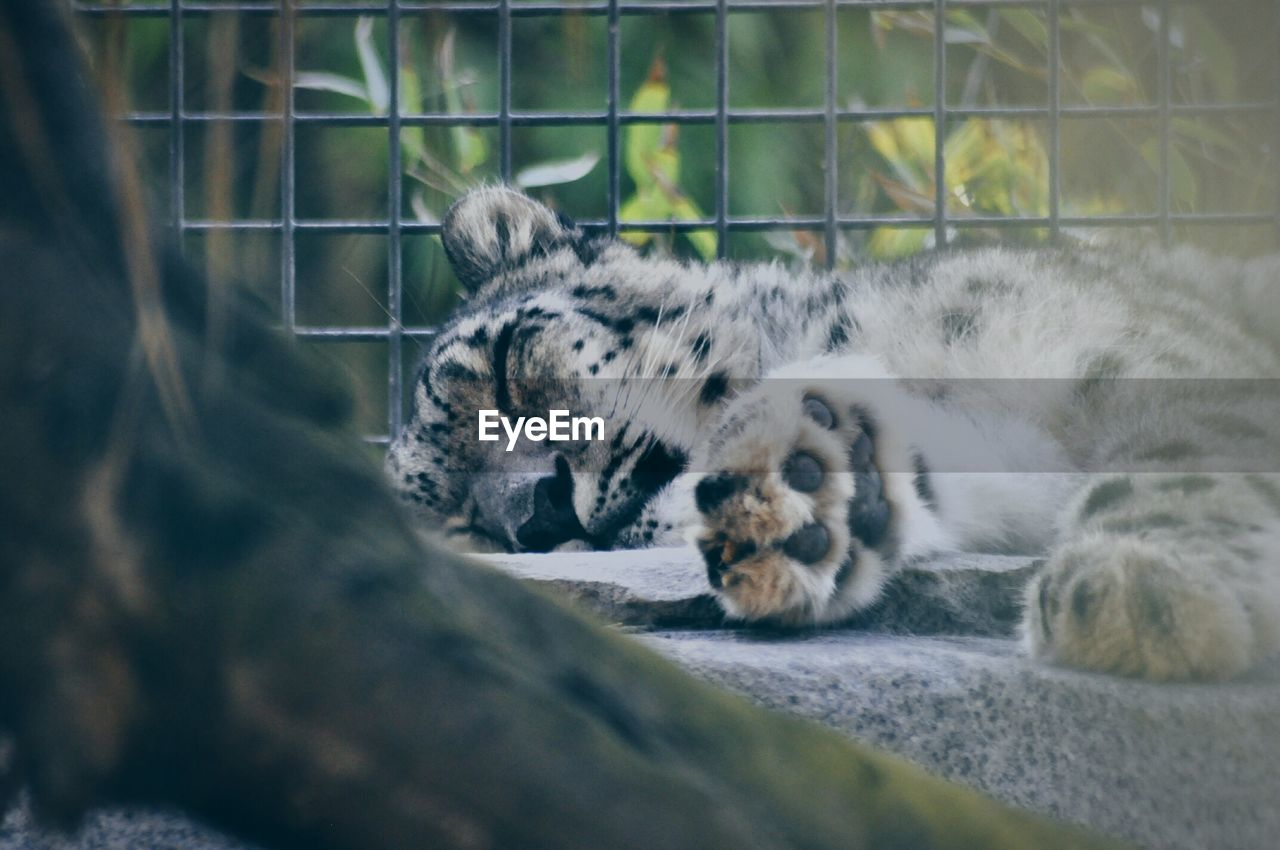 animal themes, sleeping, relaxation, mammal, one animal, lying down, feline, animals in the wild, no people, day, domestic cat, outdoors, close-up, nature