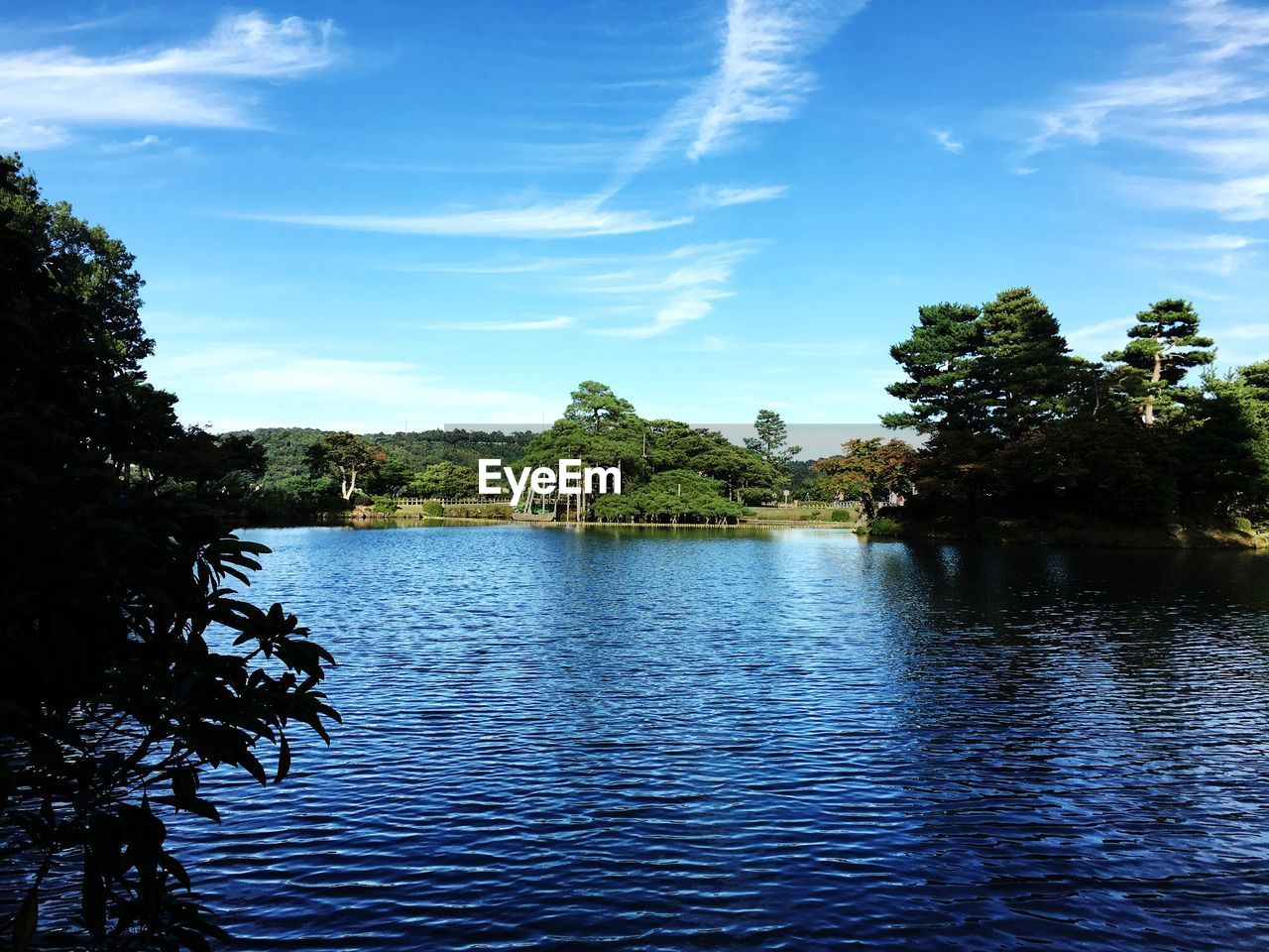 water, tree, sky, plant, cloud - sky, tranquility, beauty in nature, tranquil scene, waterfront, scenics - nature, nature, lake, no people, growth, day, non-urban scene, outdoors, rippled