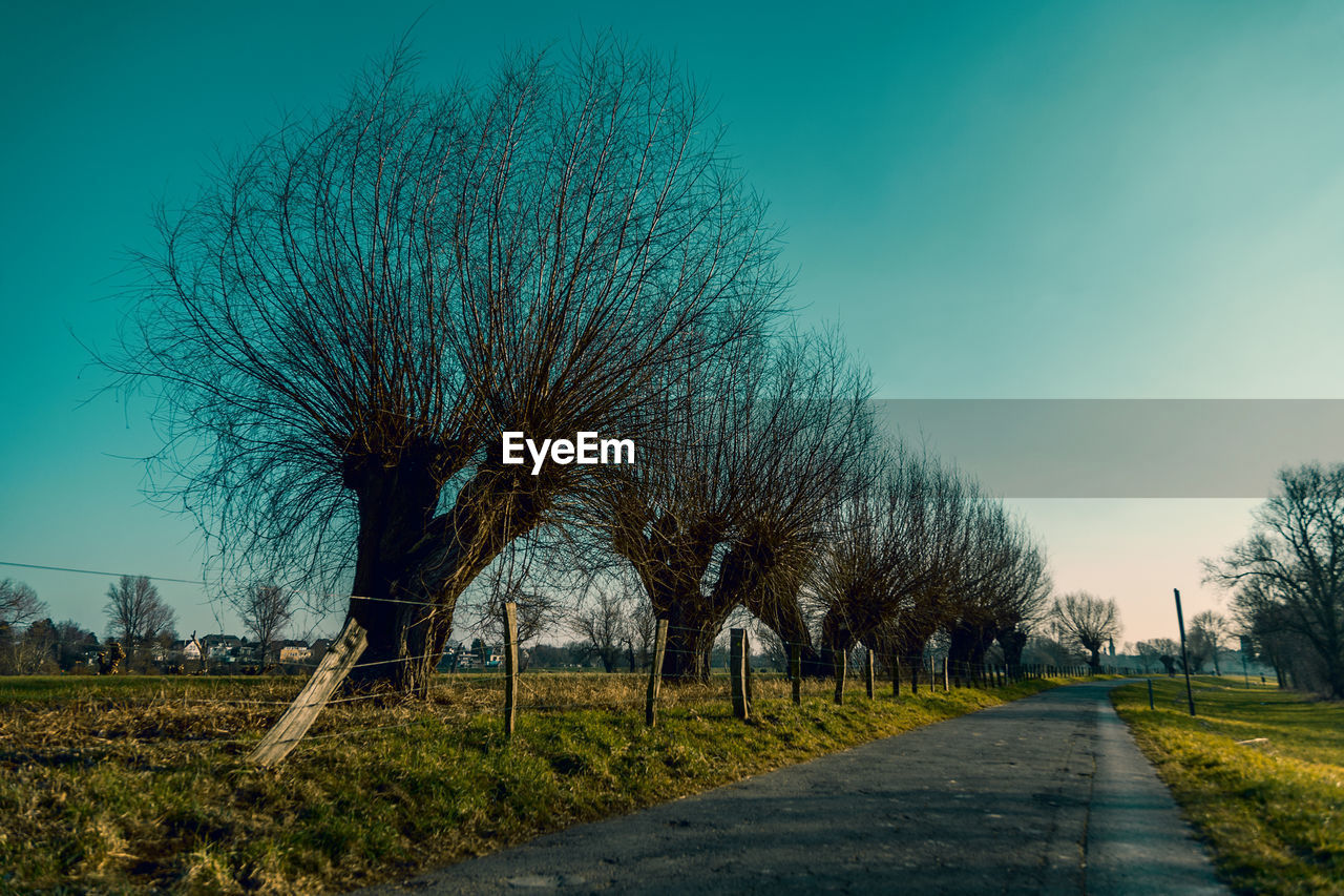 tree, plant, sky, direction, the way forward, nature, no people, bare tree, road, transportation, beauty in nature, field, landscape, tranquility, day, tranquil scene, clear sky, outdoors, environment, blue, treelined, diminishing perspective