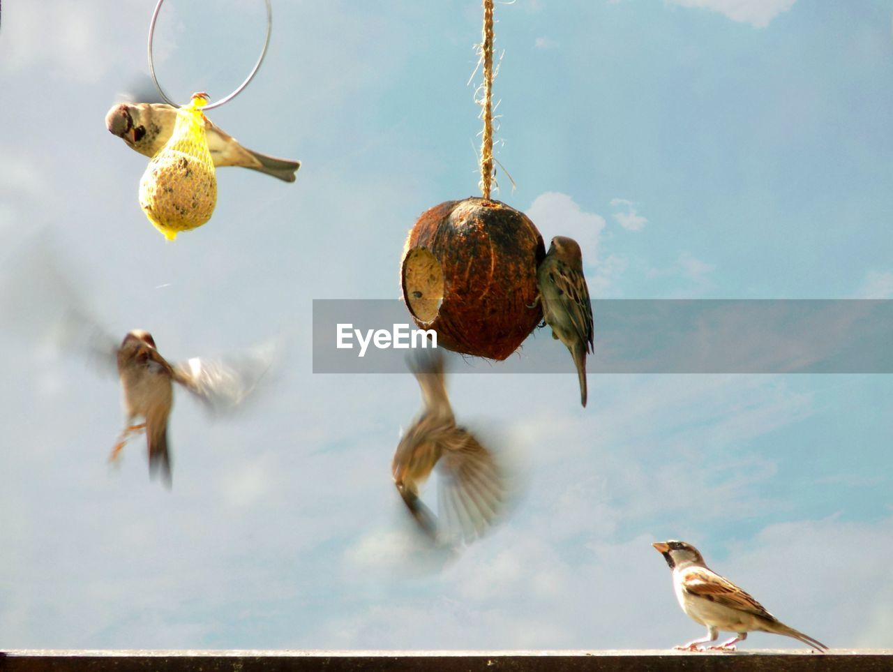 Low Angle View Of Birds On Feeder Against Sky