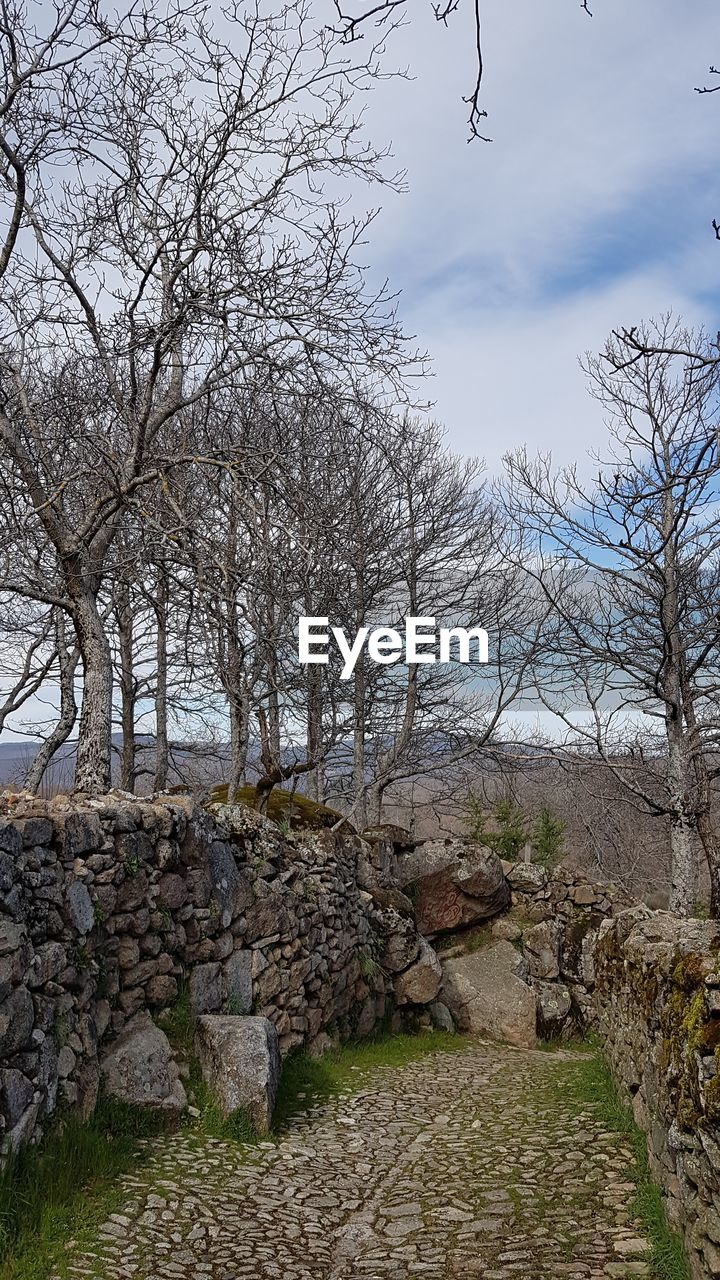 tree, sky, plant, solid, nature, tranquility, bare tree, no people, cloud - sky, day, architecture, tranquil scene, rock, rock - object, branch, scenics - nature, stone wall, land, outdoors, wall