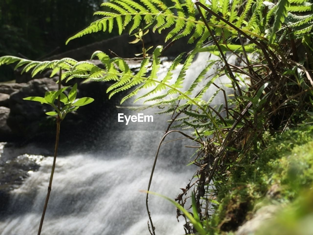 nature, growth, leaf, green color, plant, beauty in nature, no people, day, outdoors, fern, motion, water, tree, freshness