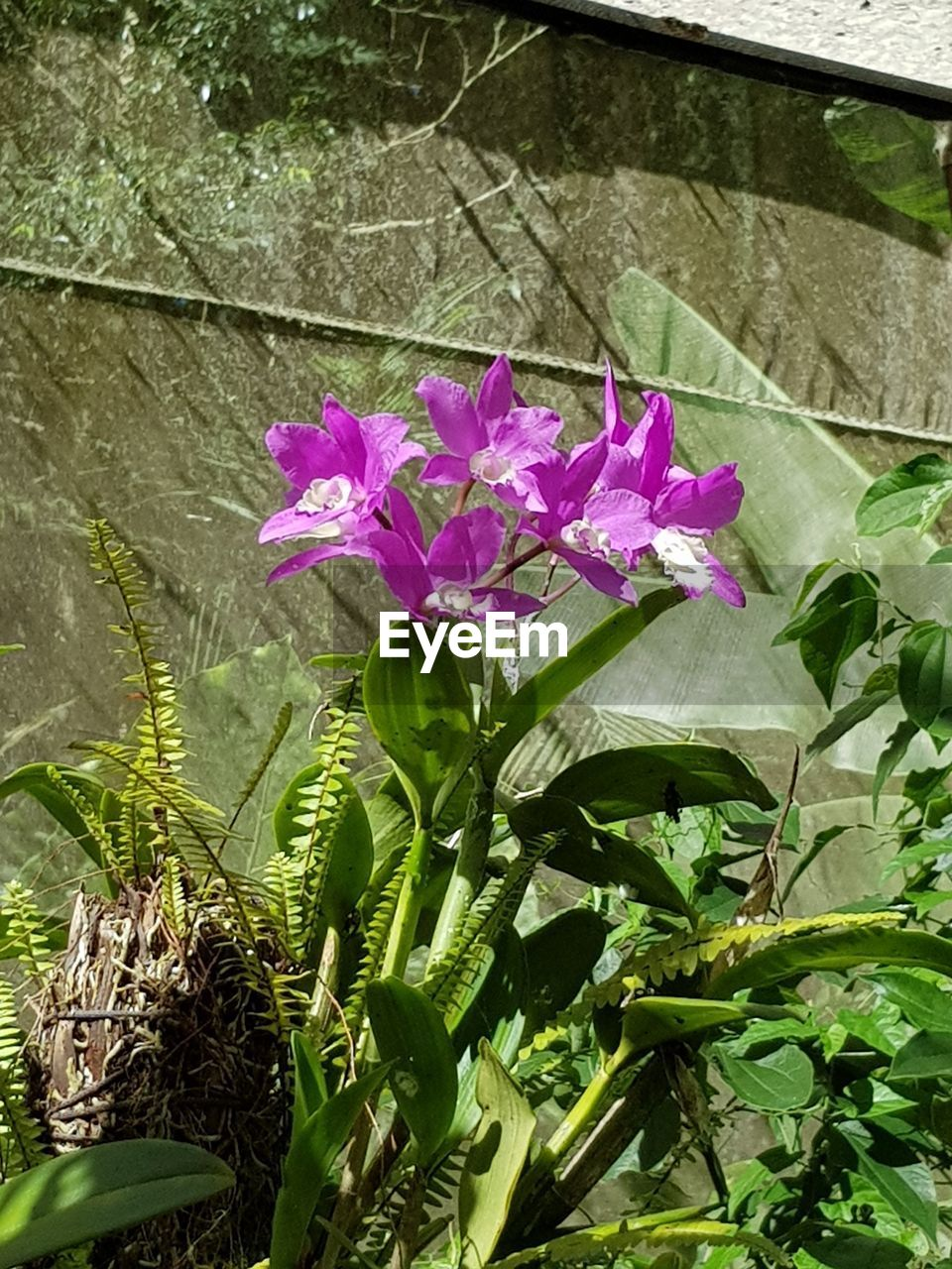growth, nature, leaf, flower, plant, beauty in nature, green color, no people, petal, fragility, day, outdoors, freshness, pink color, blooming, flower head, close-up, periwinkle