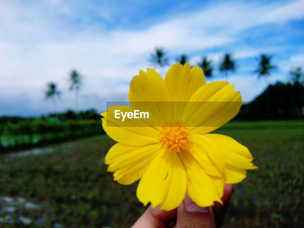 yellow, flowering plant, flower, beauty in nature, plant, vulnerability, freshness, fragility, flower head, sky, inflorescence, growth, petal, focus on foreground, nature, close-up, cloud - sky, day, field, land, pollen, outdoors