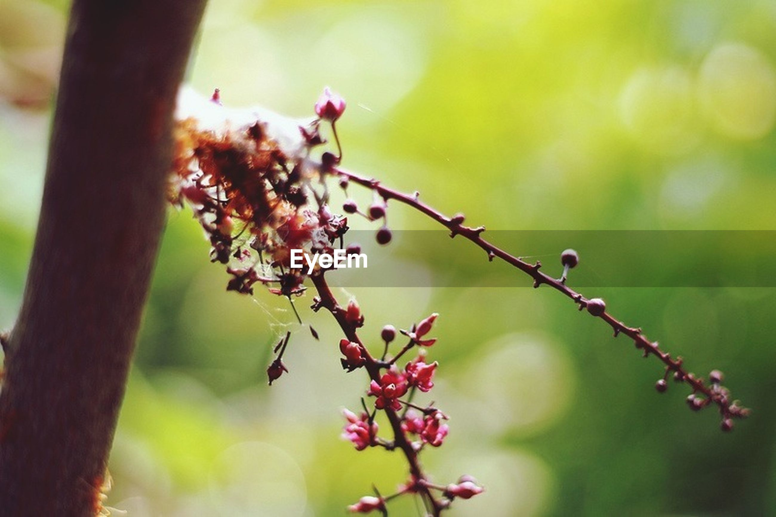 nature, growth, day, outdoors, beauty in nature, focus on foreground, plant, no people, close-up, fragility, tree, flower, freshness