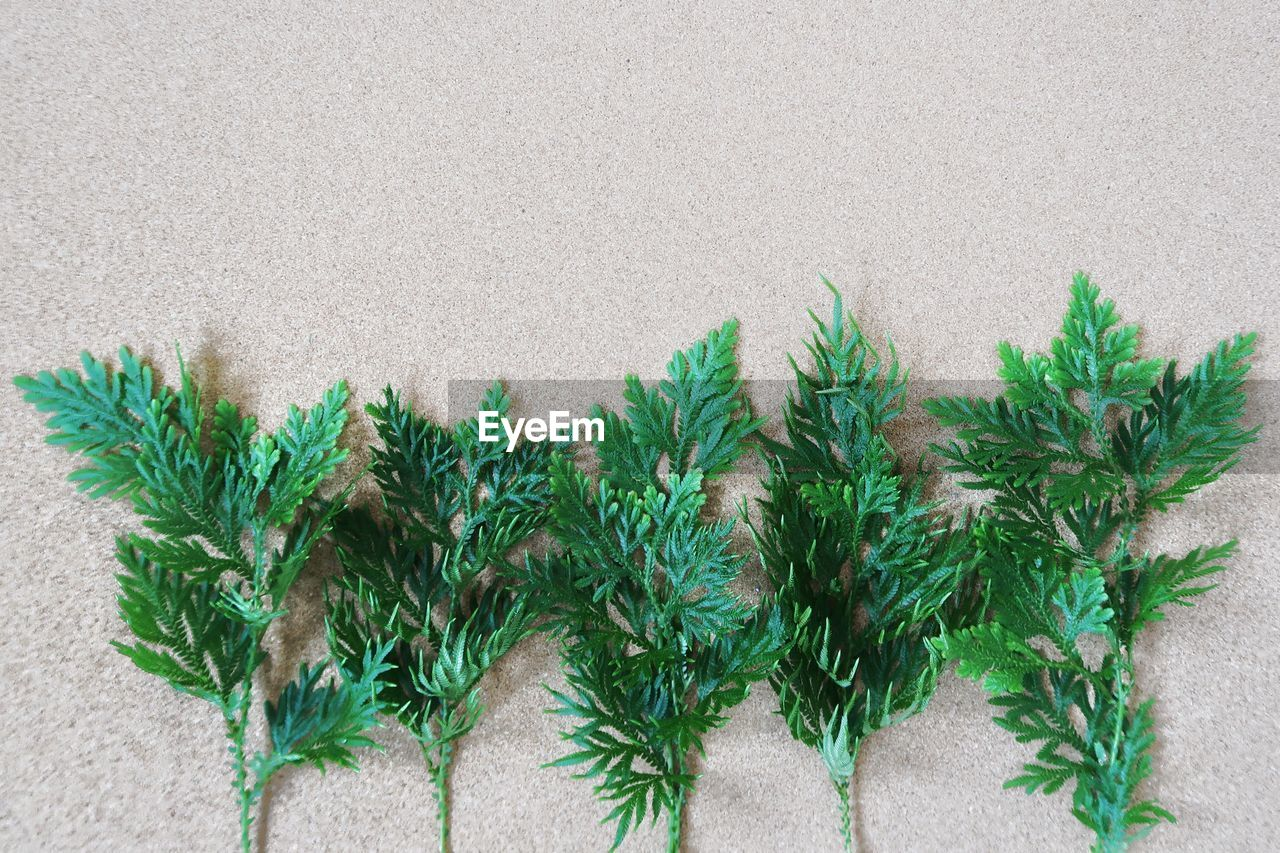 green color, plant, no people, high angle view, day, growth, leaf, close-up, freshness, outdoors, nature