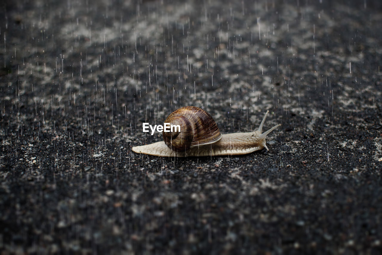 Close-up of snail on street in rain