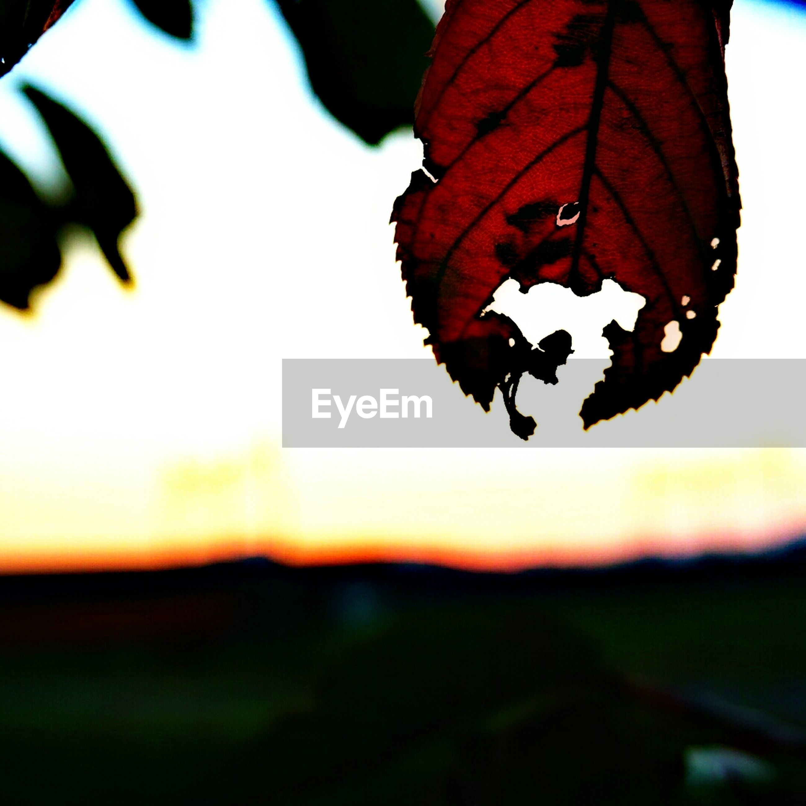 focus on foreground, close-up, nature, beauty in nature, selective focus, orange color, red, sunset, fragility, insect, tranquility, sky, outdoors, no people, growth, day, silhouette, plant, flower, sunlight