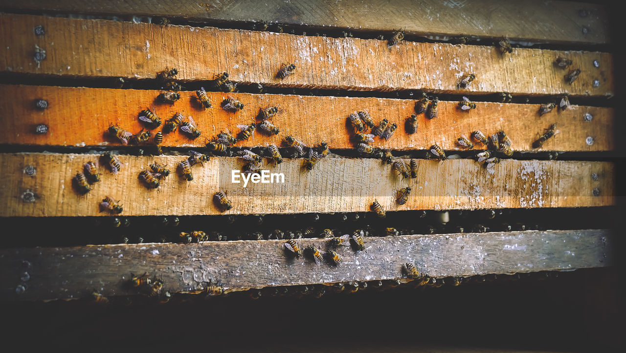 invertebrate, insect, group of animals, apiculture, large group of animals, bee, animal wildlife, animals in the wild, animal, wood - material, animal themes, beehive, day, no people, close-up, honey bee, beauty in nature, nature, outdoors, sunlight