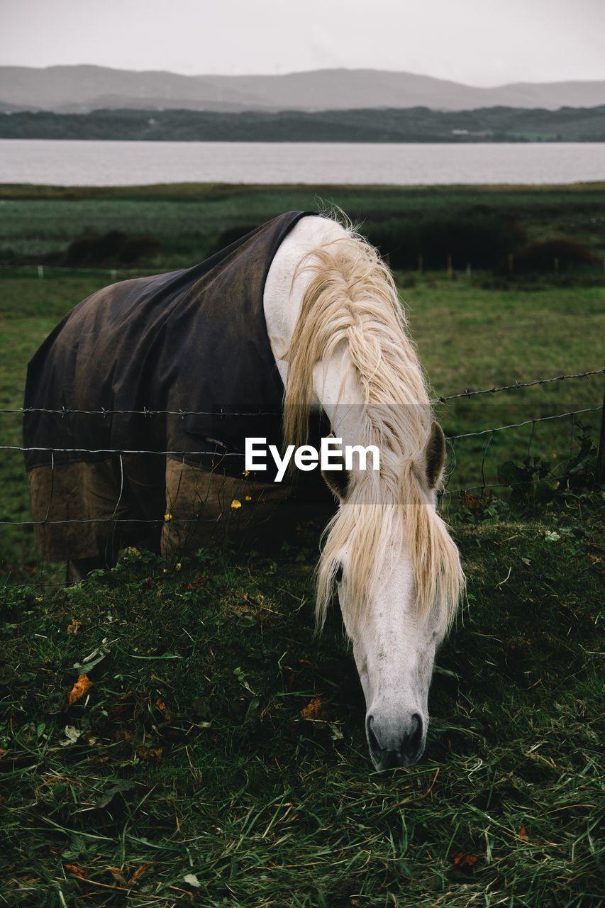Horse Grazing On Field