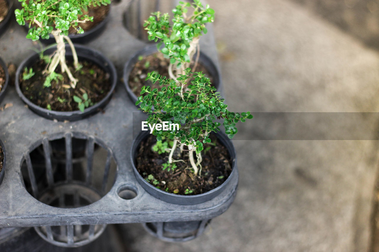 plant, growth, green color, potted plant, nature, day, no people, plant part, leaf, high angle view, close-up, selective focus, beauty in nature, beginnings, outdoors, seedling, botany, dirt, new life, agriculture, flower pot, gardening, plant nursery
