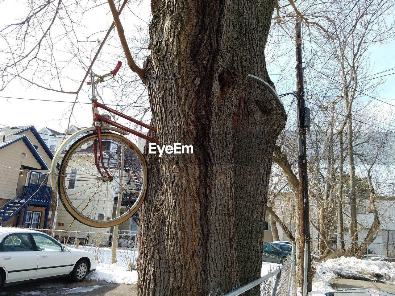 tree trunk, tree, bare tree, branch, snow, winter, day, outdoors, mode of transport, no people, nature, land vehicle, sky