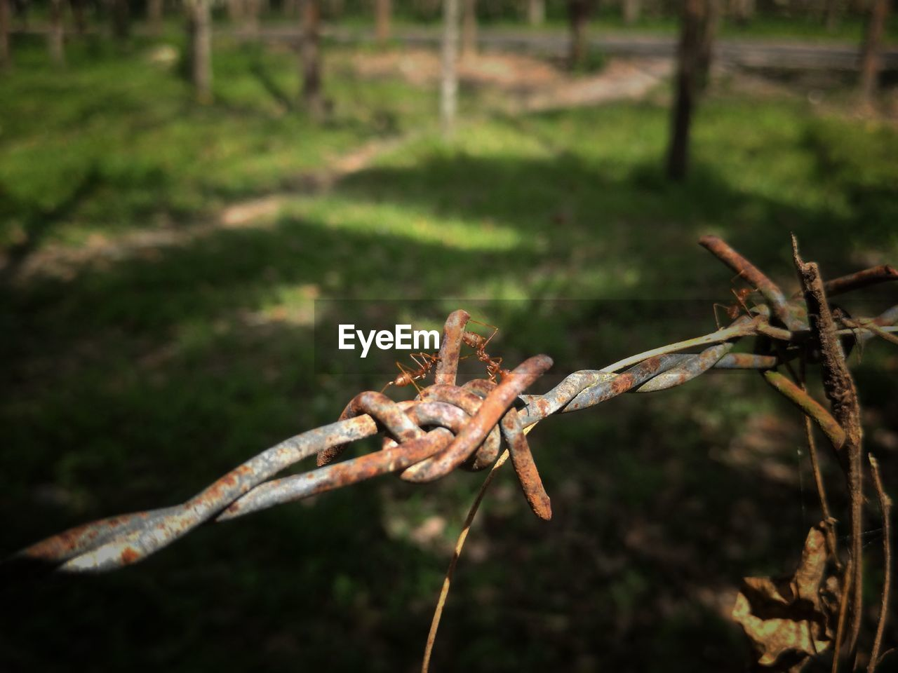 plant, focus on foreground, no people, nature, day, close-up, outdoors, tree, barbed wire, selective focus, field, land, growth, grass, protection, branch, security, sunlight, leaf, fence