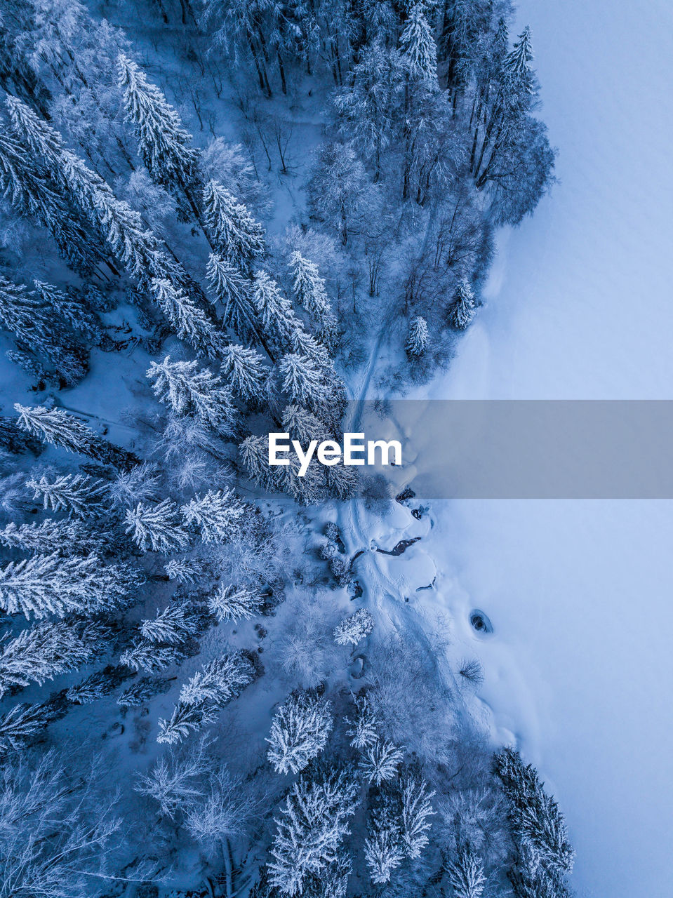 High angle view of snow covered pine trees