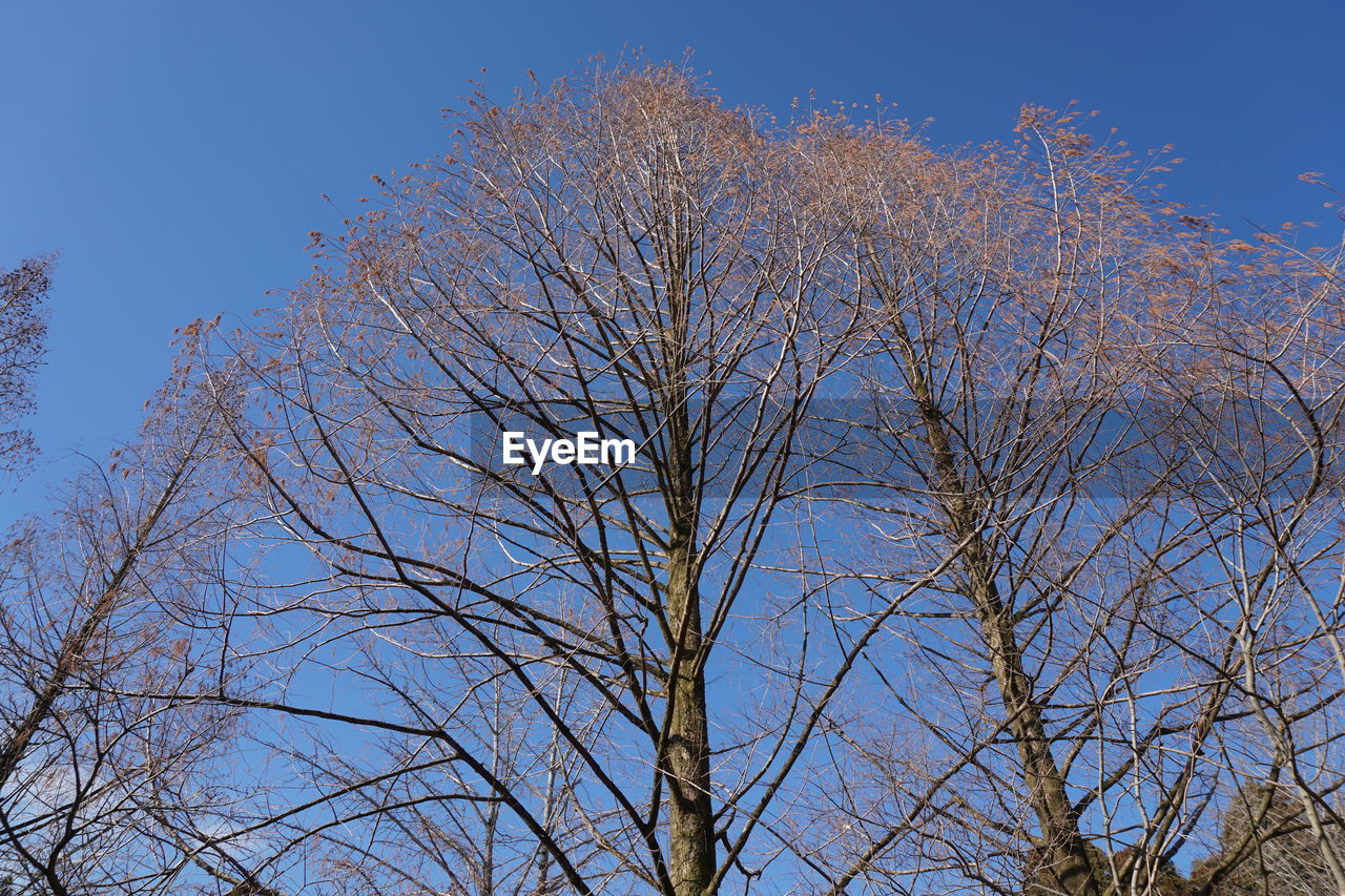 bare tree, tree, branch, nature, growth, clear sky, blue, no people, outdoors, sky, day