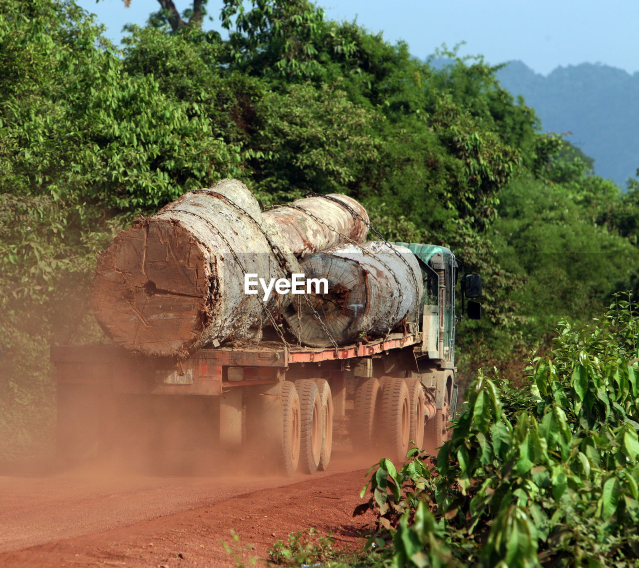 Truck Carrying Tree Trunks In Forest