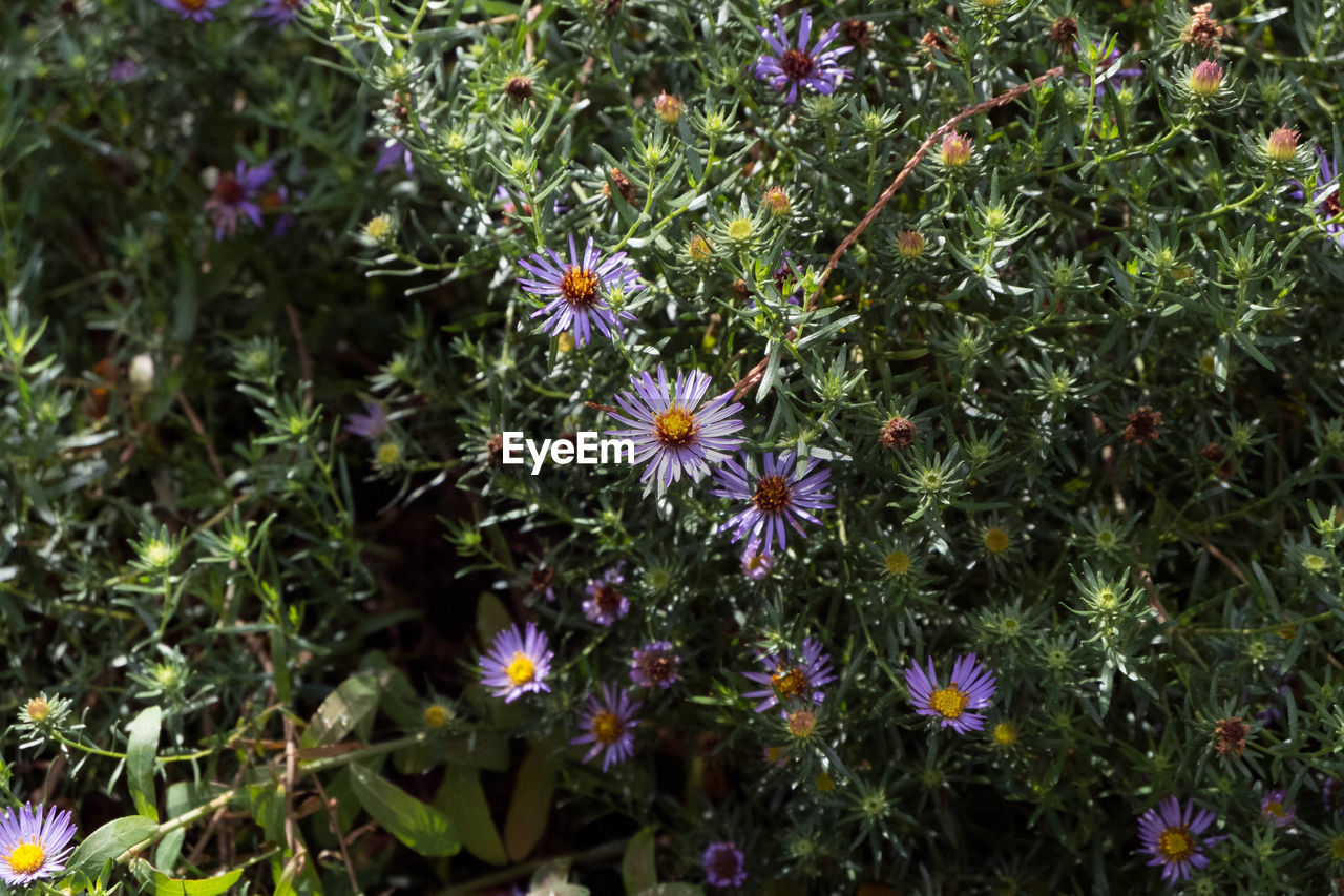 flower, growth, fragility, nature, petal, beauty in nature, blooming, plant, flower head, freshness, no people, outdoors, day