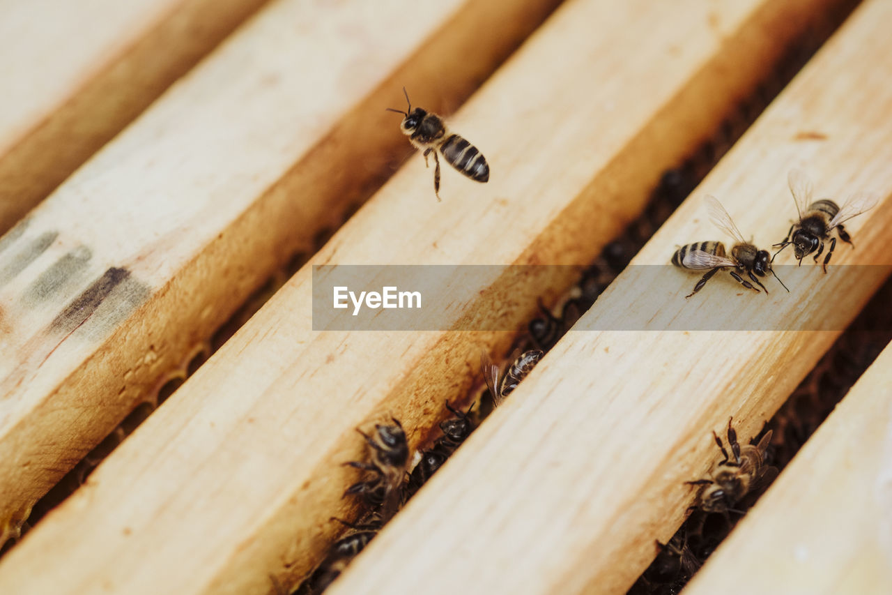 HIGH ANGLE VIEW OF BEE ON WOODEN FLOOR