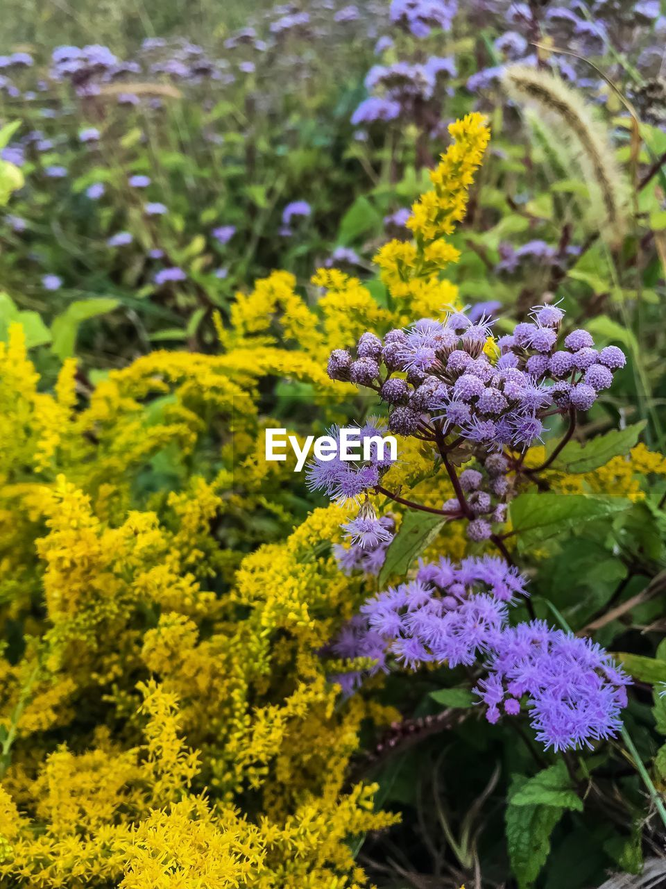 flower, growth, nature, fragility, plant, beauty in nature, freshness, purple, day, no people, yellow, petal, outdoors, green color, blooming, close-up, flower head