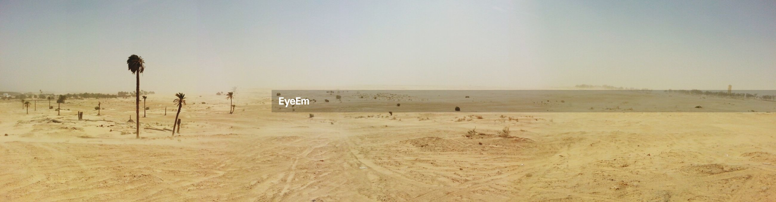 clear sky, sand, bird, landscape, tranquil scene, tranquility, copy space, nature, beach, animal themes, scenics, beauty in nature, sky, desert, animals in the wild, non-urban scene, field, flying, remote