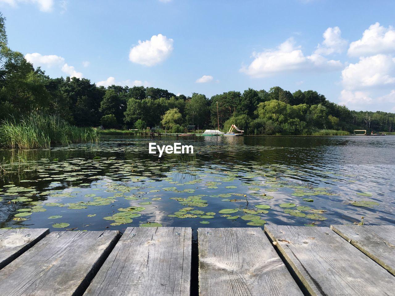 Lotus Leaves Floating On Lake