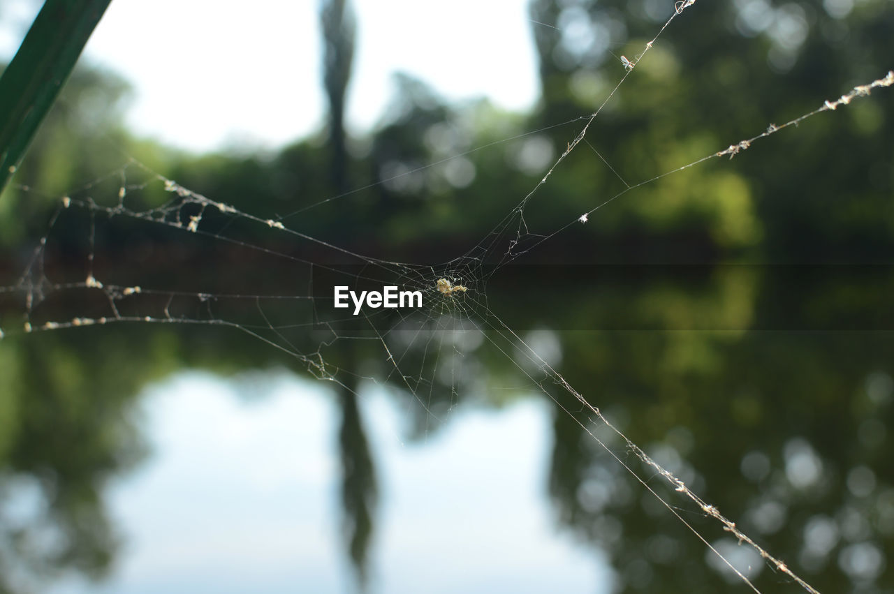 Close-up of spider web against lake reflection