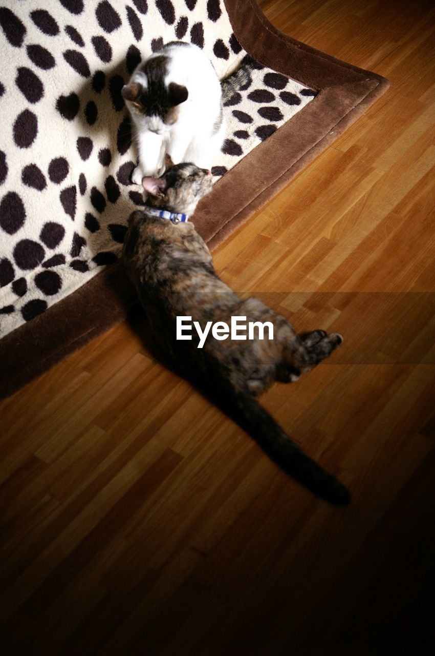 high angle view, one animal, domestic animals, pets, animal themes, indoors, mammal, no people, hardwood floor, domestic cat, directly above, relaxation, lying down, day