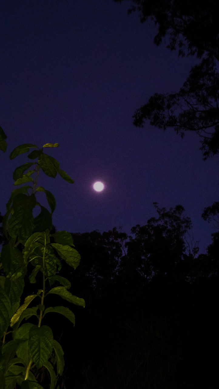 night, moon, nature, leaf, beauty in nature, plant, growth, scenics, sky, outdoors, tranquility, no people, tree, tranquil scene, astronomy, low angle view, moonlight, half moon, close-up