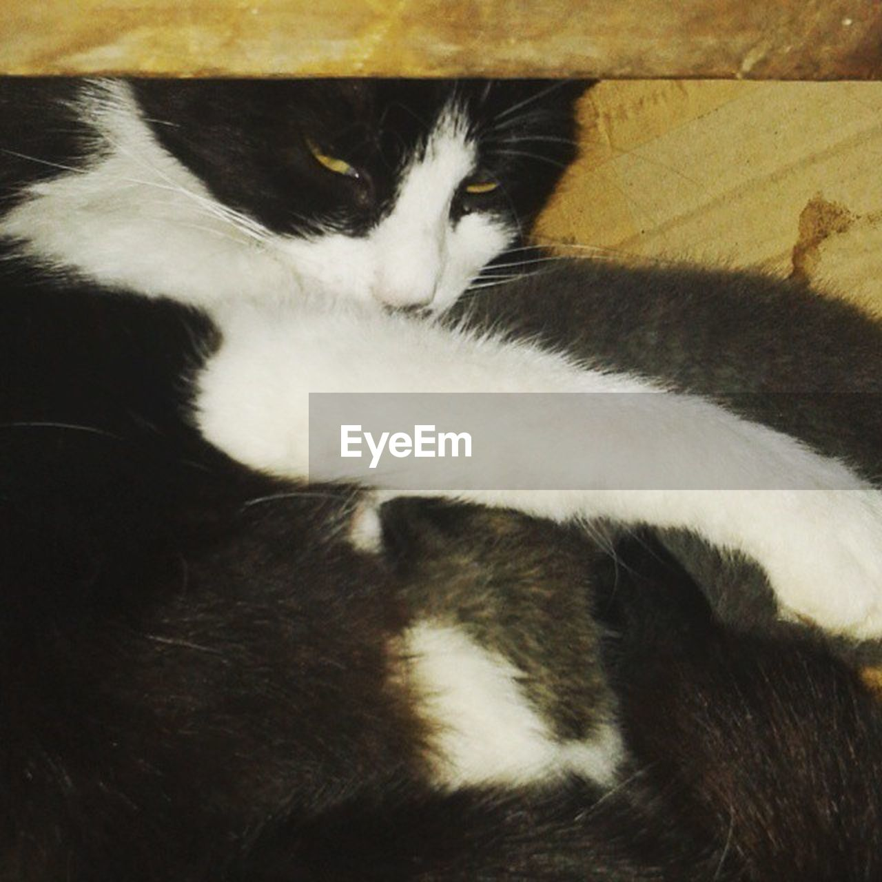 domestic cat, indoors, pets, feline, domestic animals, mammal, no people, close-up, animal themes, day