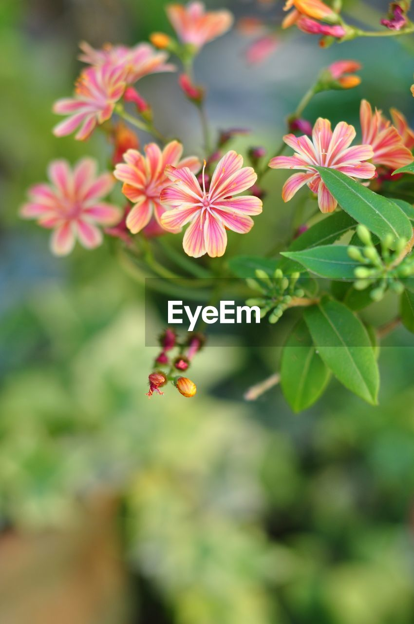 flowering plant, flower, plant, growth, freshness, beauty in nature, fragility, vulnerability, flower head, petal, close-up, inflorescence, day, green color, focus on foreground, nature, plant part, selective focus, leaf, no people, outdoors, pollen, pollination