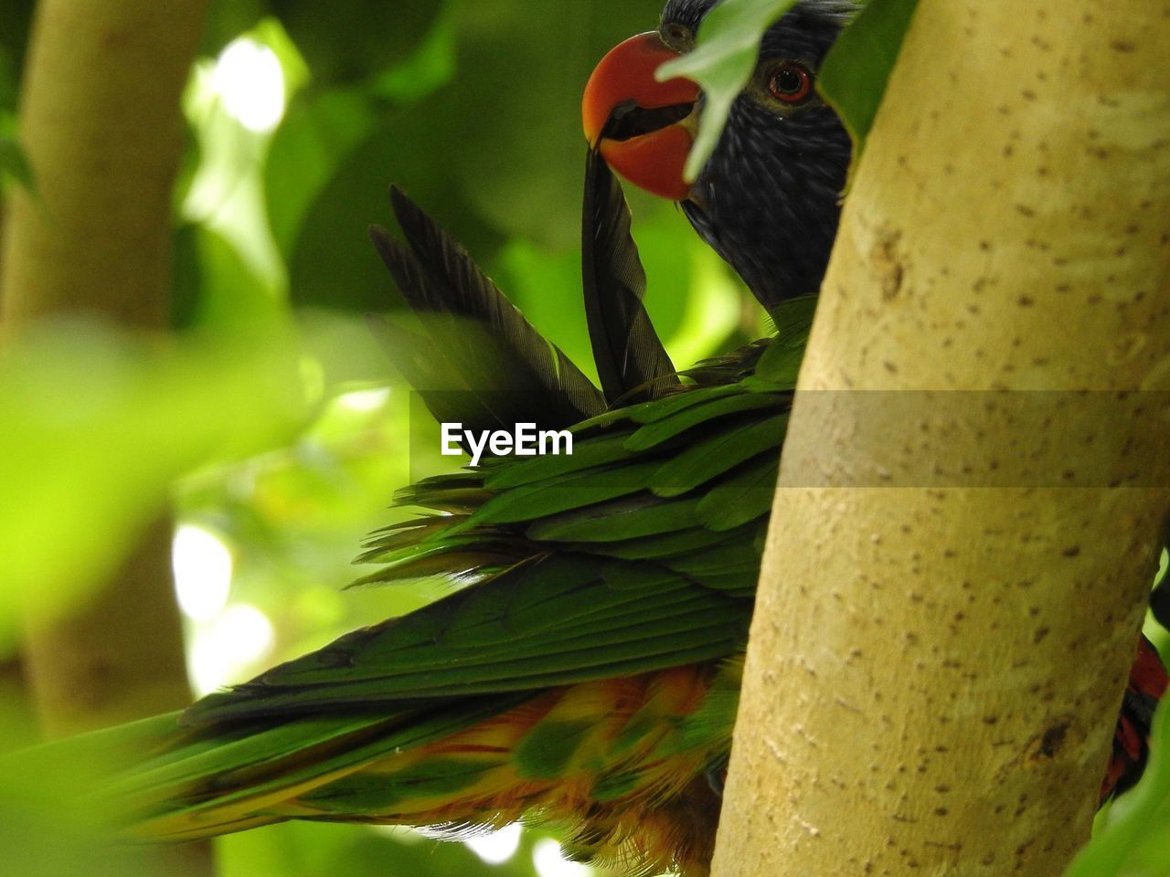 CLOSE-UP OF BIRD IN A TREE
