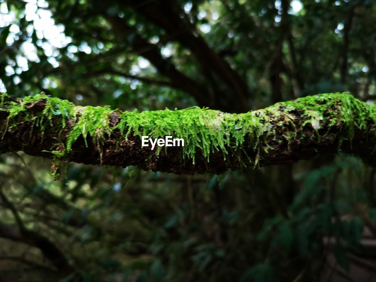 green color, plant, growth, close-up, plant part, nature, focus on foreground, no people, leaf, day, tree, beauty in nature, moss, selective focus, outdoors, tranquility, branch, freshness, water, rainforest, purity