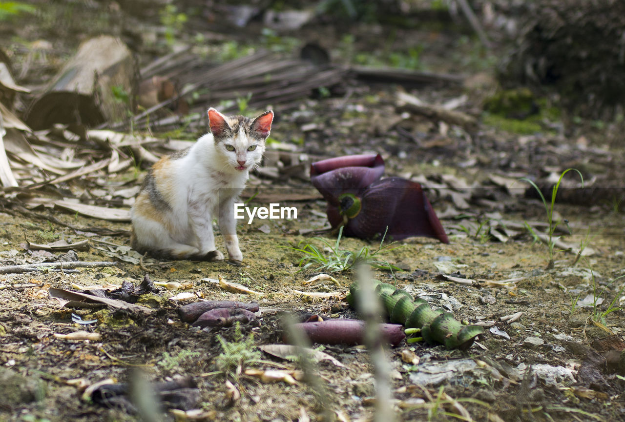 animal themes, animal, domestic cat, mammal, pets, cat, domestic, vertebrate, domestic animals, one animal, selective focus, feline, field, land, nature, no people, plant, day, portrait, looking at camera, whisker