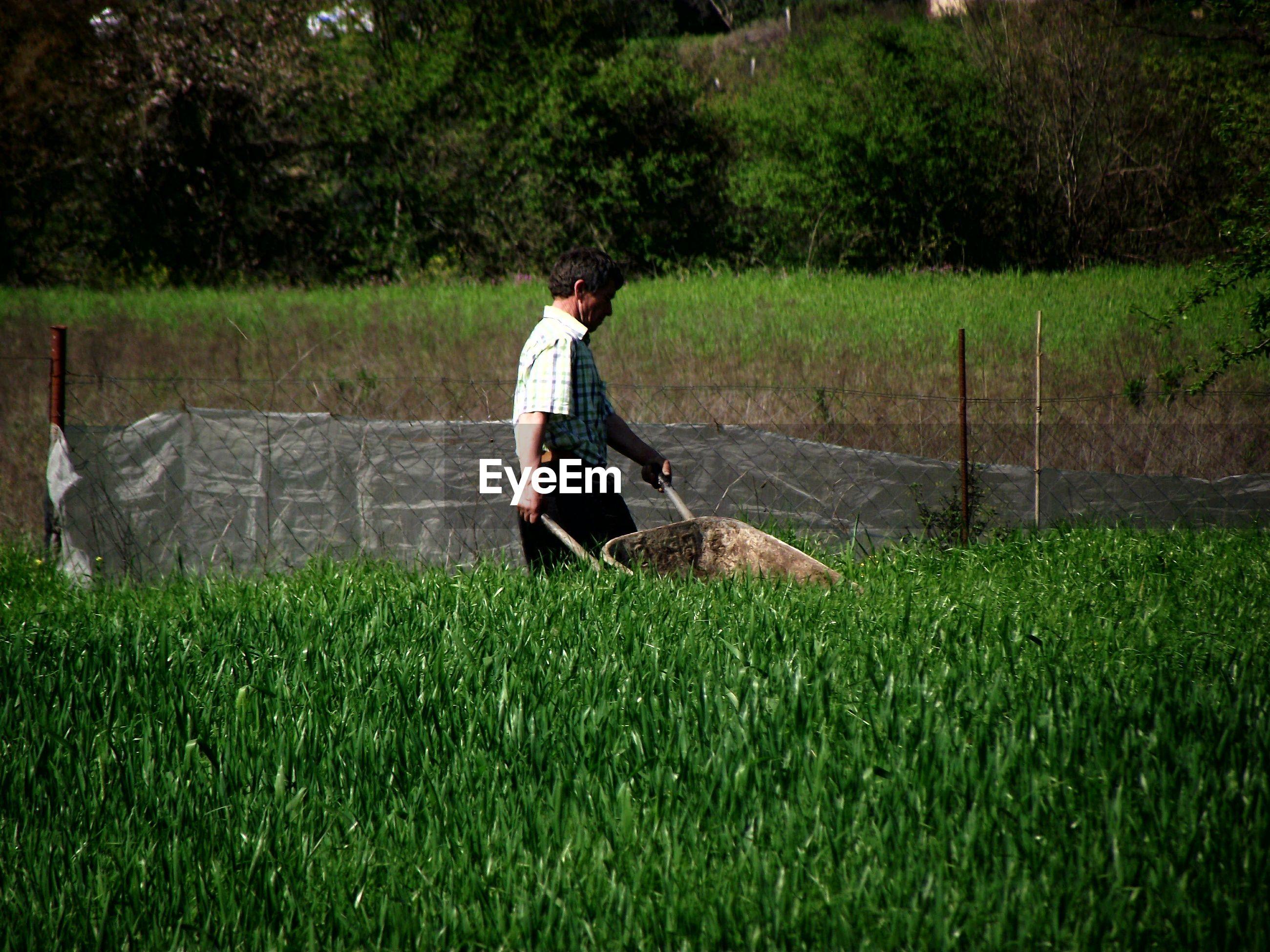 Farmer working amidst plants on field