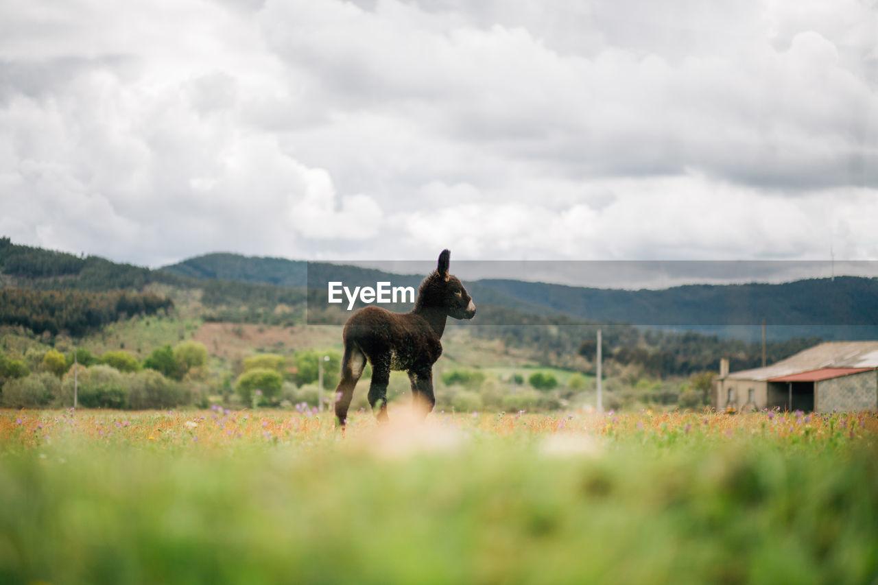 Donkey On Field Against Sky