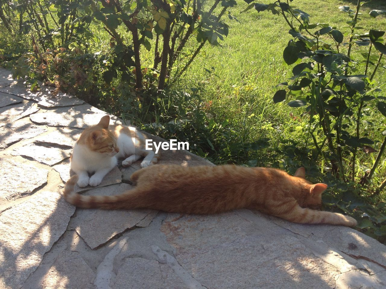 mammal, cat, animal themes, animal, feline, domestic cat, domestic animals, pets, domestic, vertebrate, plant, one animal, relaxation, nature, sunlight, day, tree, no people, lying down, sitting, whisker