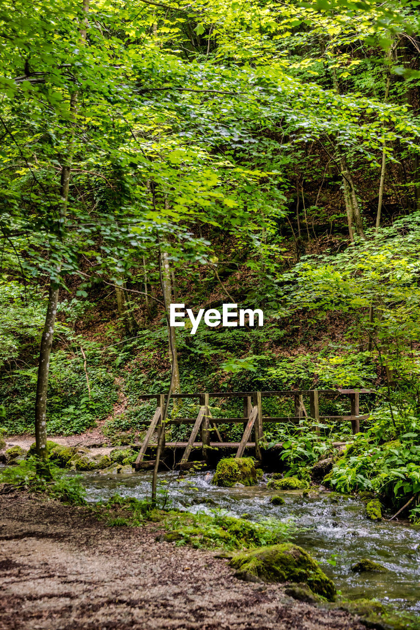 forest, tree, plant, land, nature, environment, water, lush foliage, foliage, beauty in nature, woodland, day, green color, no people, tranquility, scenics - nature, non-urban scene, animal, tranquil scene, animal themes, outdoors, rainforest, stream - flowing water