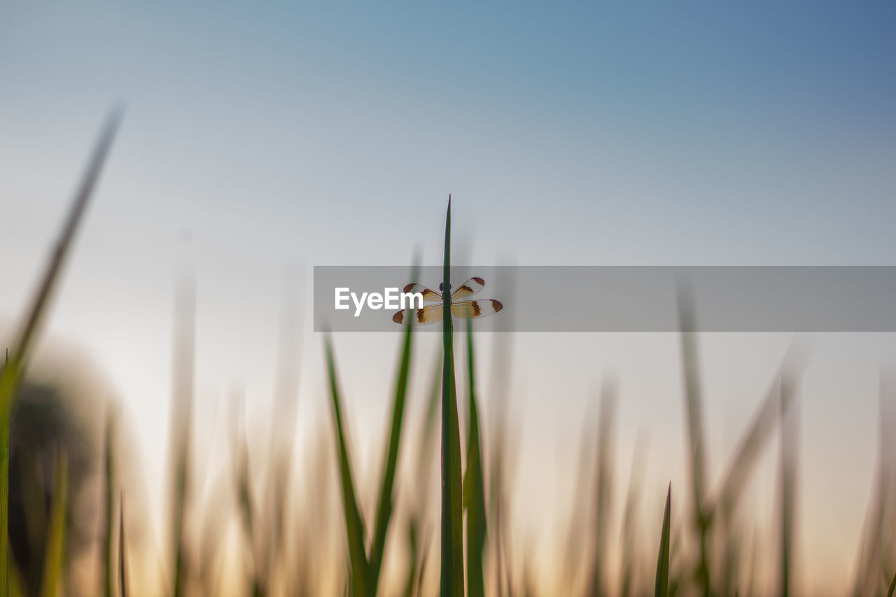 plant, growth, sky, nature, beauty in nature, close-up, no people, flower, focus on foreground, flowering plant, day, freshness, vulnerability, fragility, field, outdoors, green color, tranquility, selective focus, clear sky, blade of grass