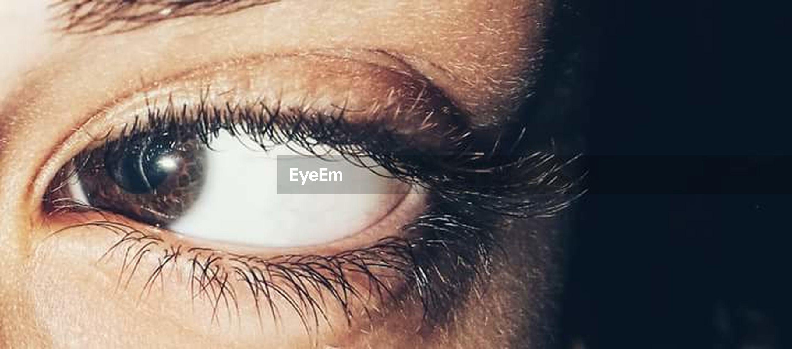 close-up, human eye, beauty, eyelash, human body part, macro, beautiful people, women, young adult, sensory perception, beautiful woman, people, adult, females, eyebrow, adults only, eyeball, one person, eyesight, outdoors, day