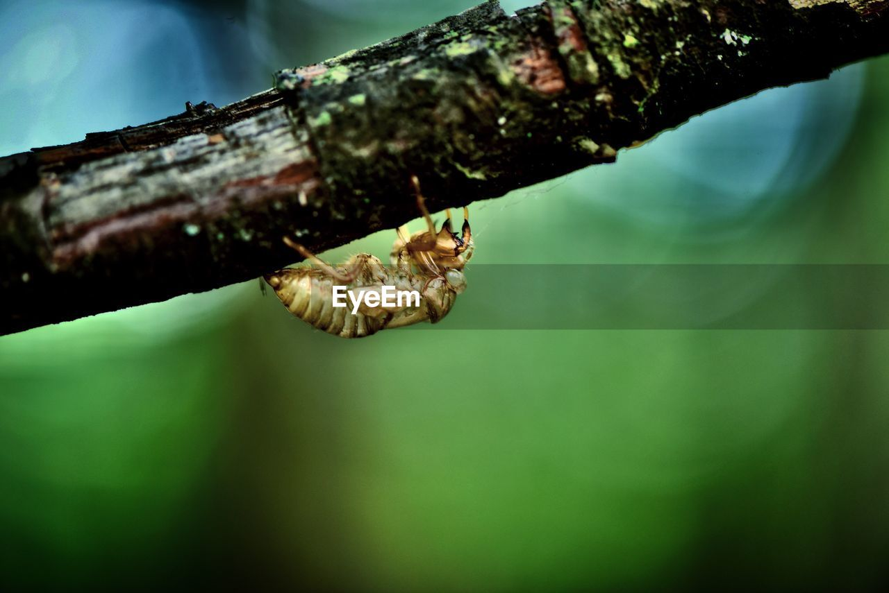 tree, close-up, focus on foreground, plant, selective focus, no people, day, nature, animal wildlife, branch, animals in the wild, one animal, animal themes, animal, invertebrate, outdoors, tree trunk, trunk, leaf, growth