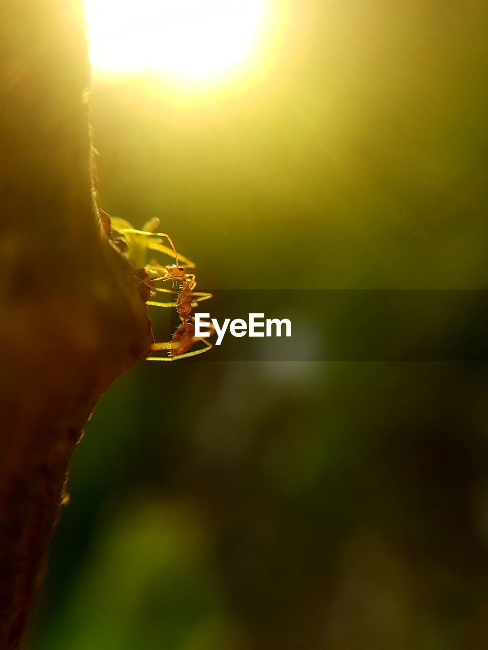 close-up, one animal, invertebrate, animals in the wild, animal themes, animal wildlife, animal, plant, insect, nature, day, selective focus, outdoors, no people, sunlight, focus on foreground, beauty in nature, growth, arthropod